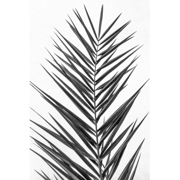 Tirage photo Palm Leaf
