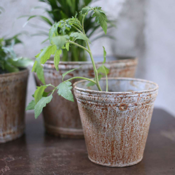 Cache-Pot M Allure rustique pour plantes - Zinc Vieilli, Bohème chic