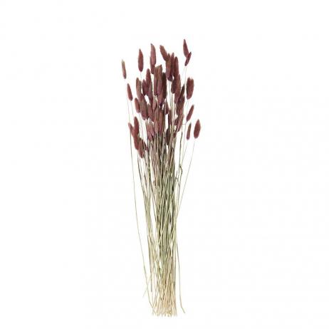 Bouquet de Fleurs séchées naturelles coloris Fuchsia