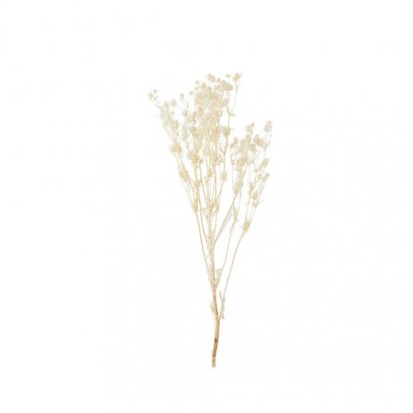 Bouquet de Fleurs séchées naturelles coloris beige